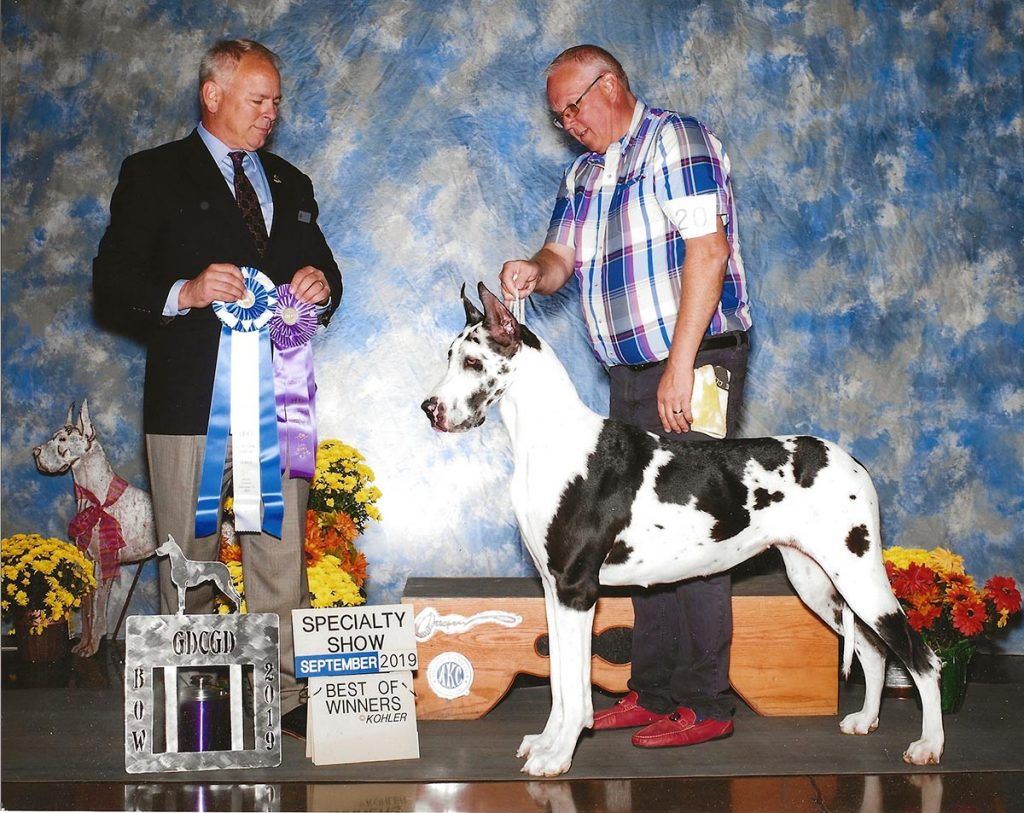 Great Dane Specialty Show